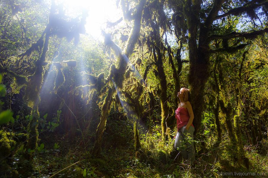 Фото дремучий лес