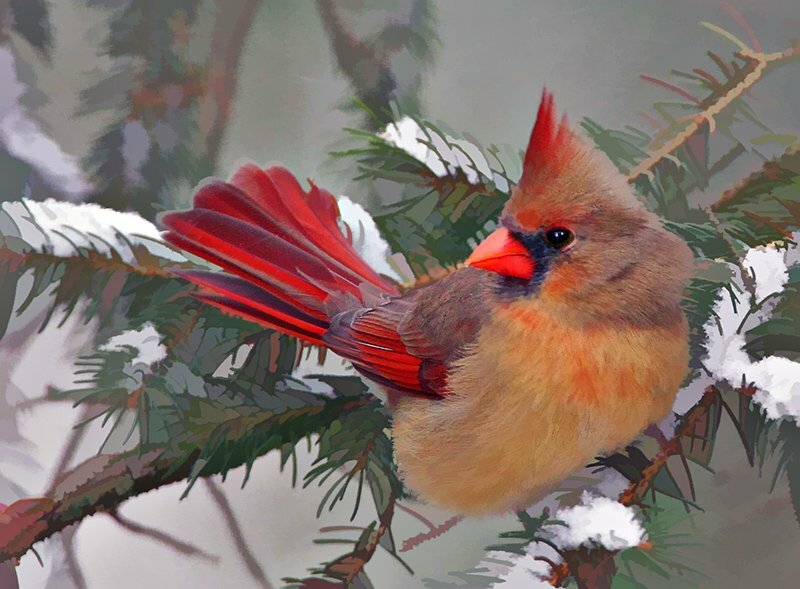 Маленькие птицы 1