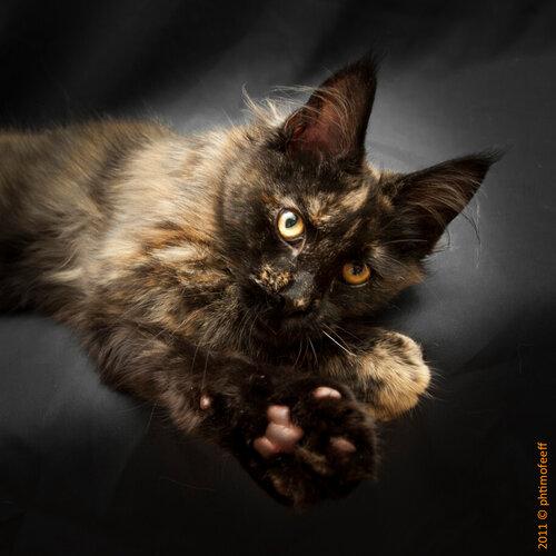 Кошки, фотограф Алексей Тимофеев www.photo-grafer.ru