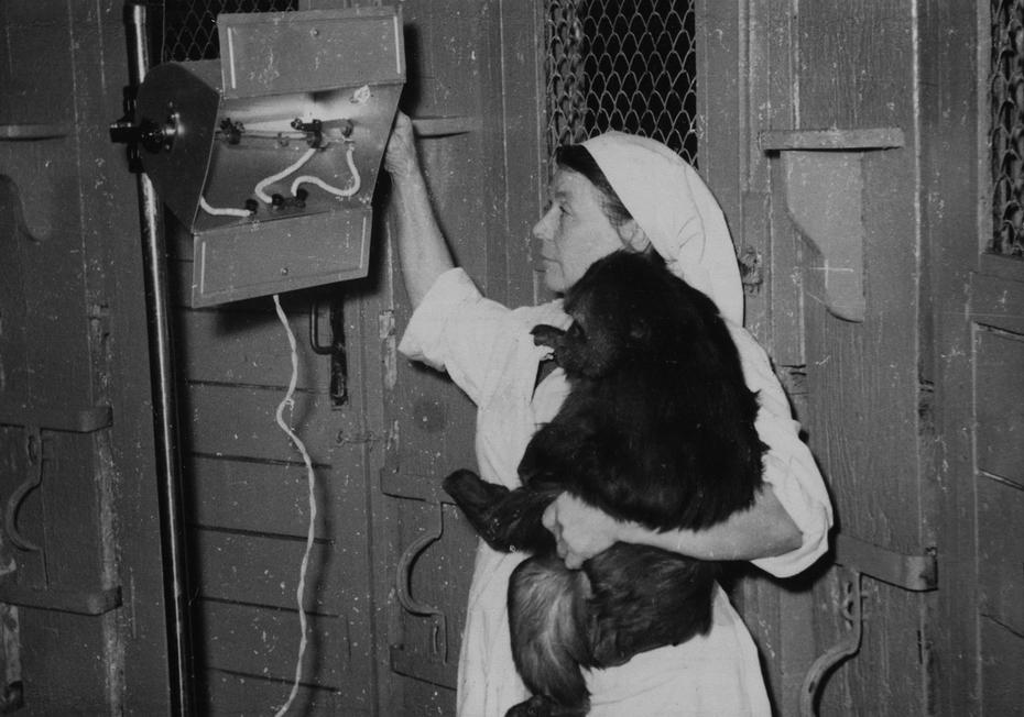 1961. Облучение кварцем животных в Киевском зоопарке в зимний период