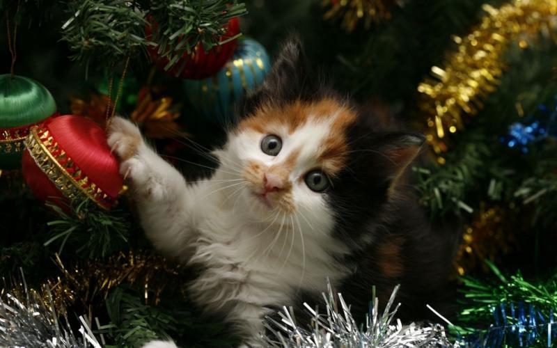 Коты на ёлке - фото 18