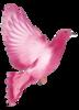 Птицы, птички на веточках, голуби - клипарт в формате PNG