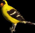 feli_gs_bird.png