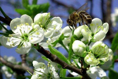 Наващивание рамок и пчелопродукты: на заметку пчеловоду