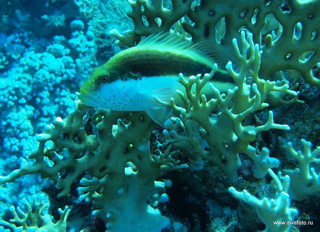 Рыб а ветвях огненного коралла