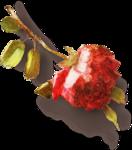 ldavi-heartwindow-rose4.png