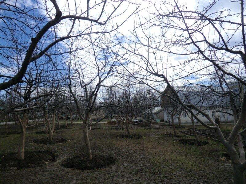 Яблоневый сад.