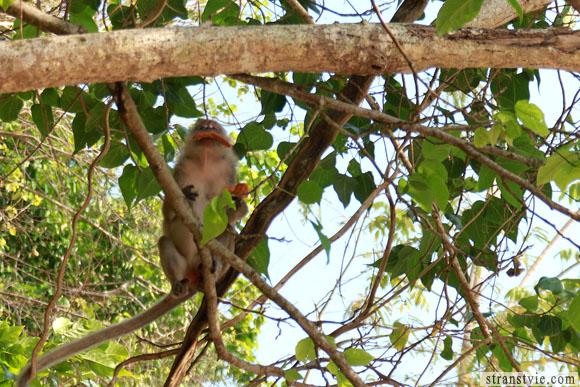 Обезьяна есть чипсы на тропе обезьян