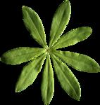 kcroninbarrow-coloroutsidethelines-leaf2.png