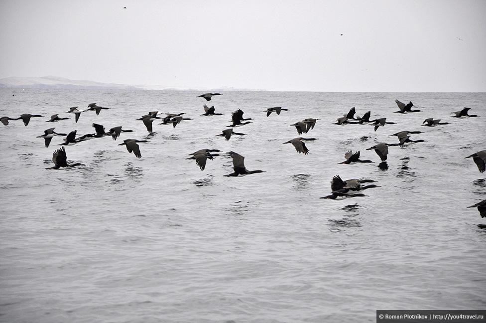 0 161750 559d2d95 orig Национальный парк Паракас и острова Бальестас в Перу