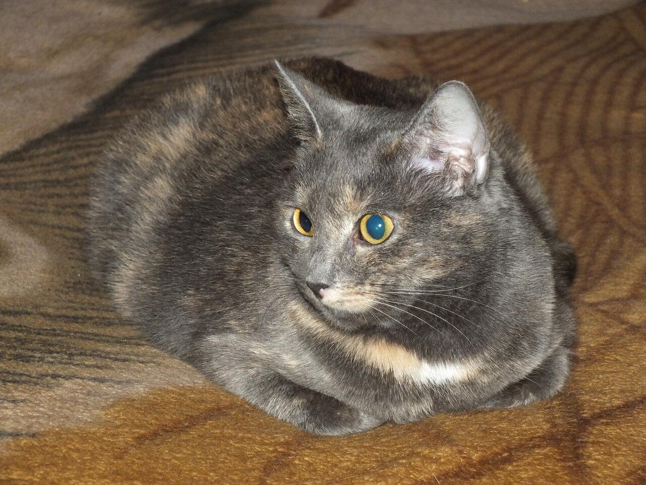 Муся. Кошко диванное.