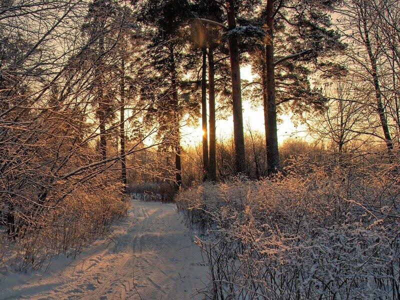 золотые лучи солнца на тропинке в заречном парке