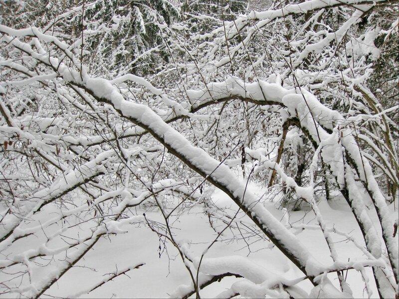 Деревья, склонившиеся под снегом