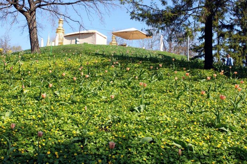 Тюльпаны на склоне