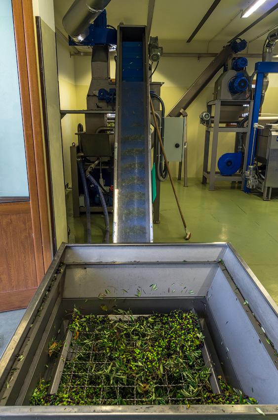 Как делают оливковое масло в Италии