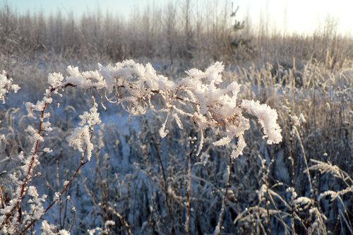 зимняя прогулка снег