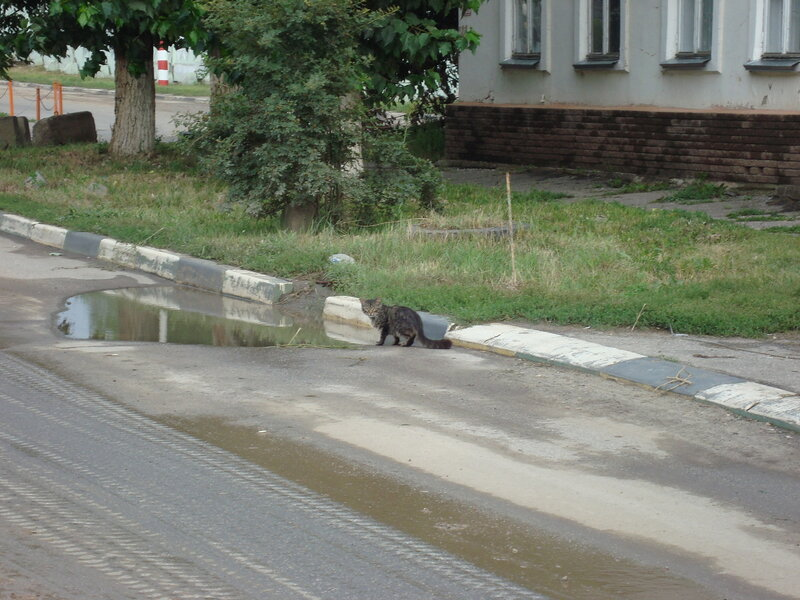 Нижний Новгород. Канавинский котэ наблюдае