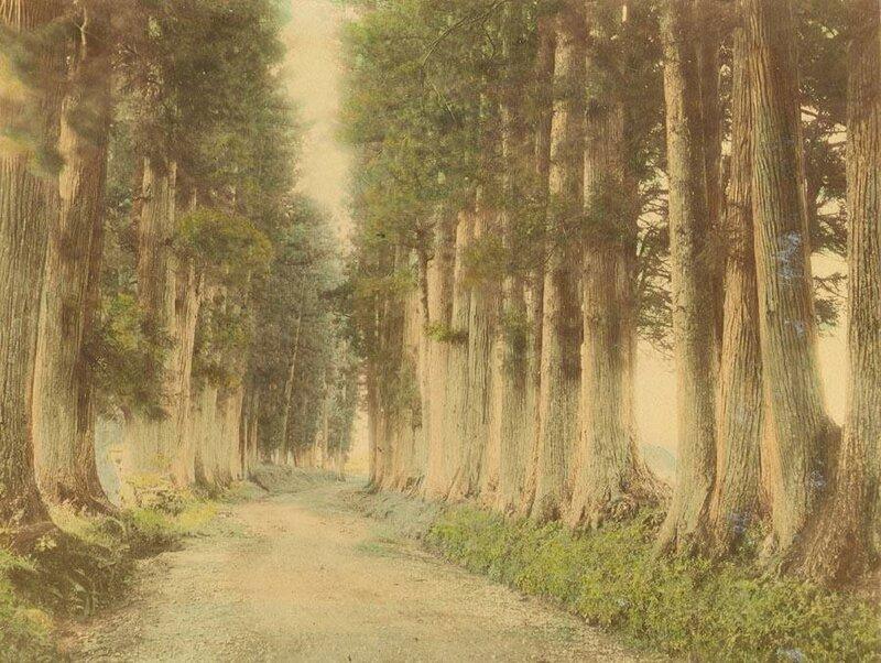 The Nikko Road