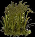 Lug_Grass_Flower (72).png