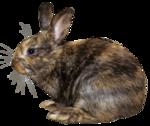 EasterOnTheFarm_Element01 (23).png