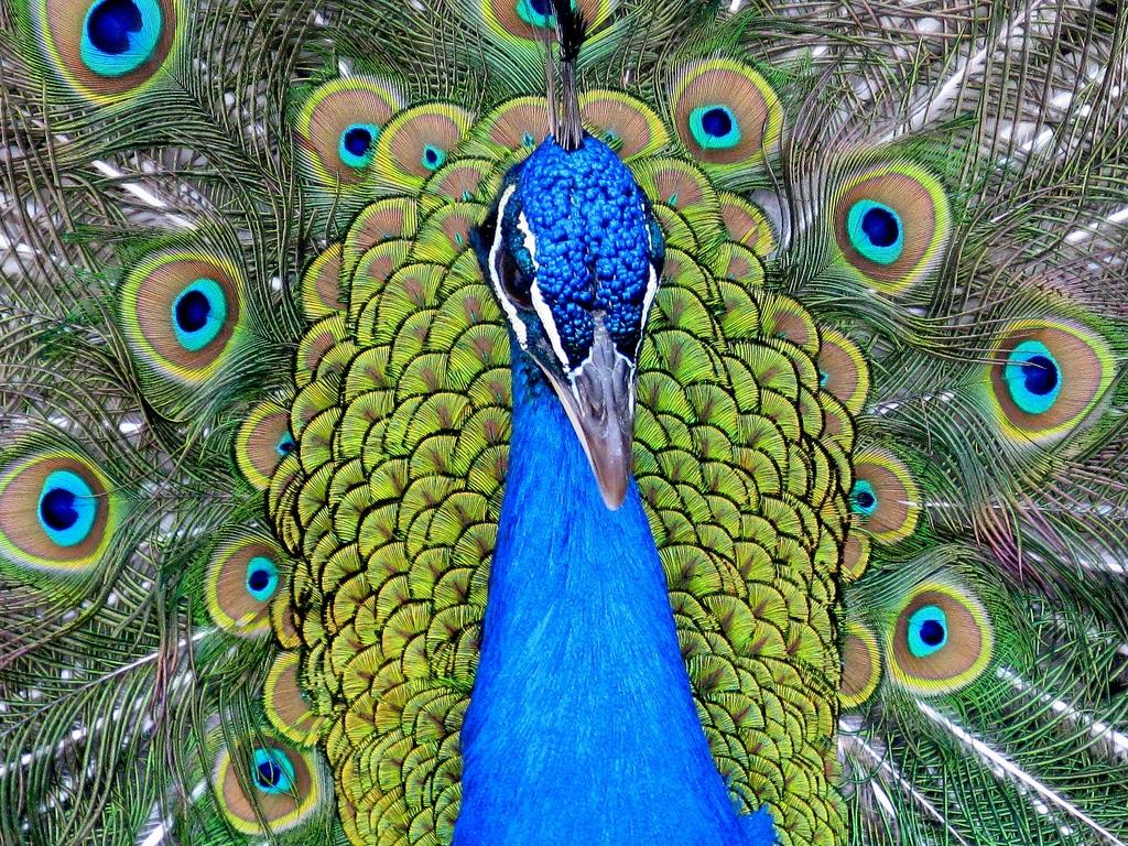 Картинки птицы мясо