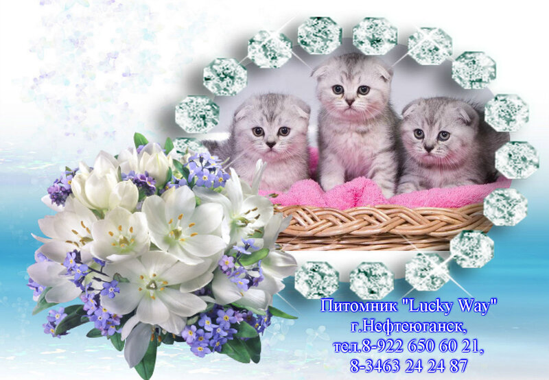 http://img-fotki.yandex.ru/get/6431/176414878.3/0_bc2bc_f65220fc_XL.jpg.jpg