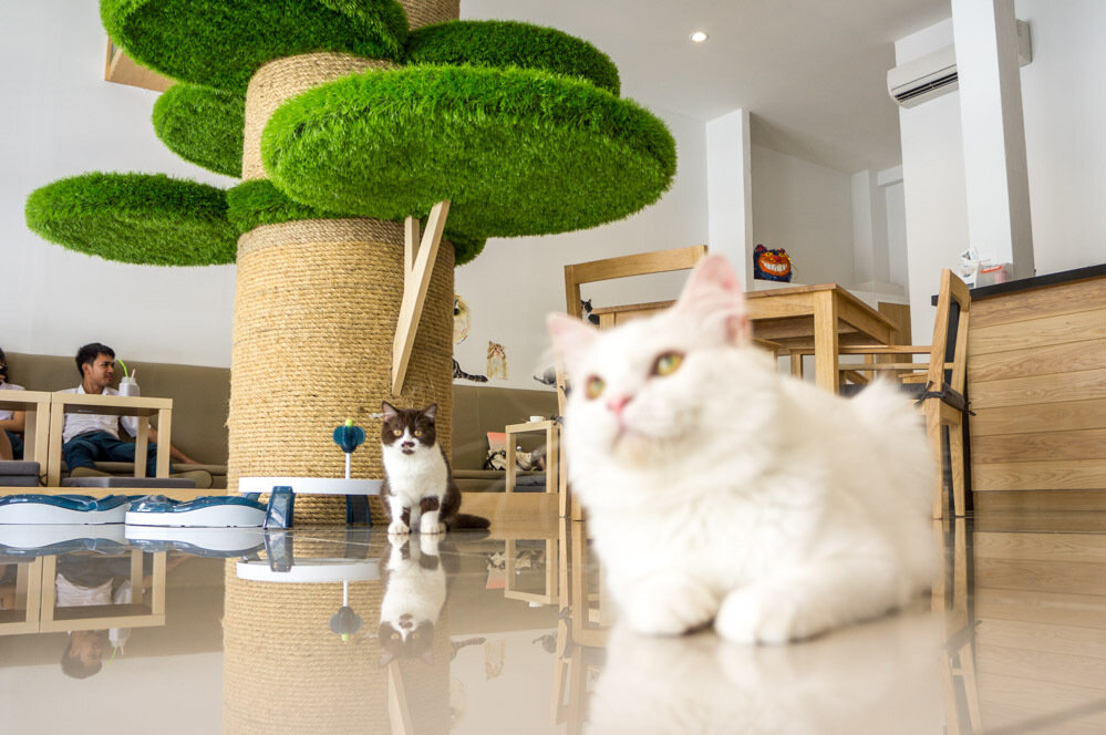 Cat Cafe Pattaya