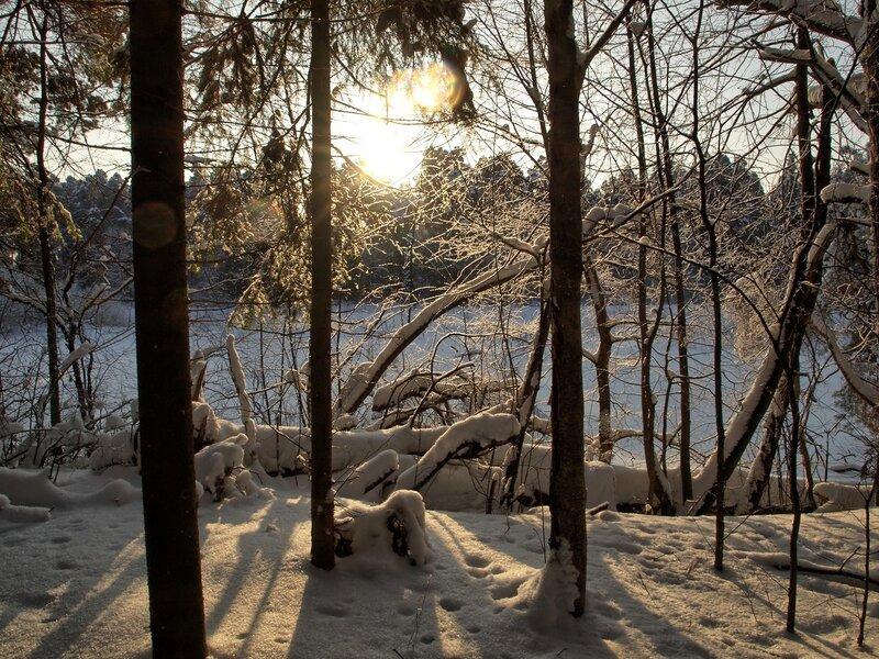 Солнце сквозь ветви деревьев