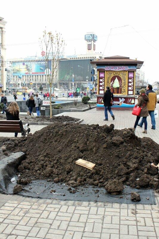 Чернозем для посадки каштанов