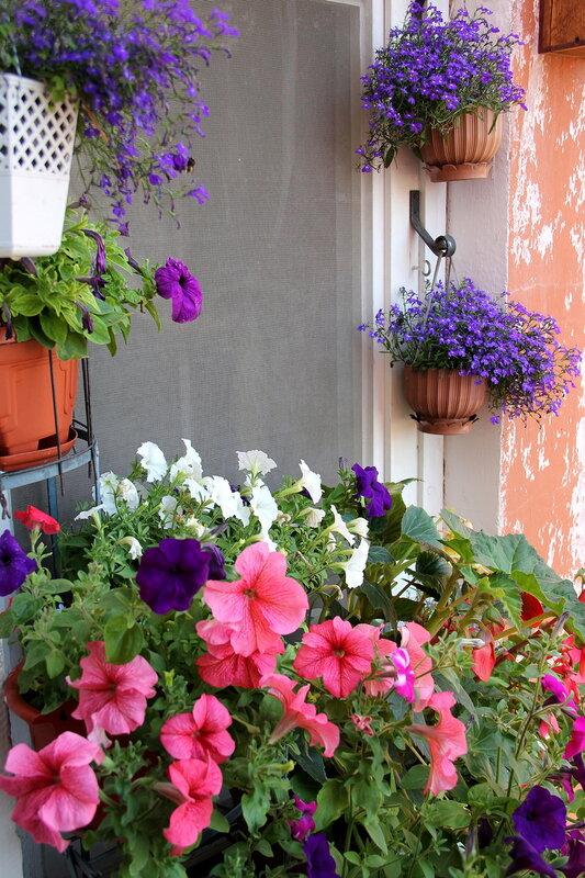 В моем цветочном мире.
