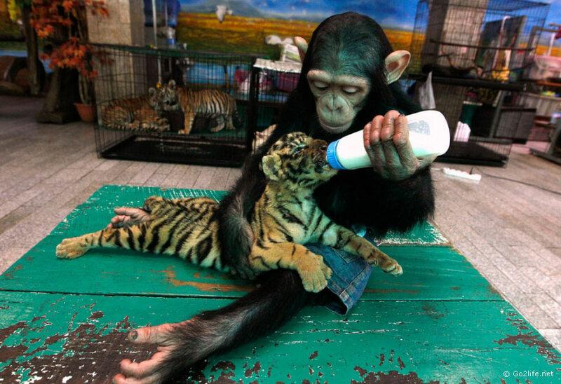 www.Go2life.net • Фотографии животных в новостях