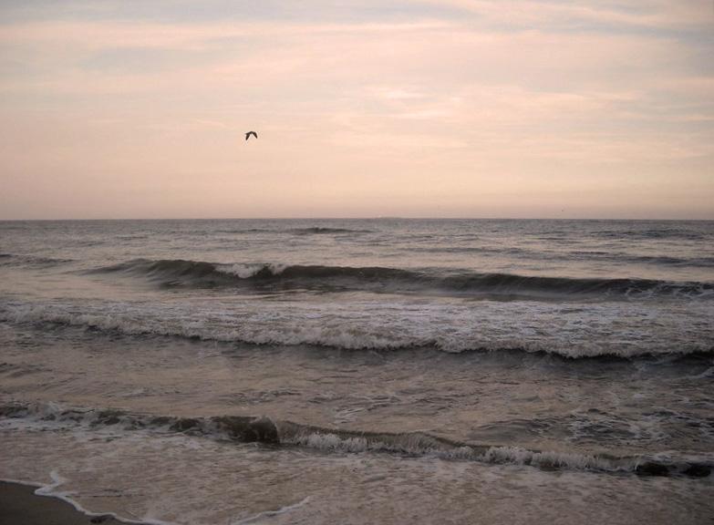 Чайка и море