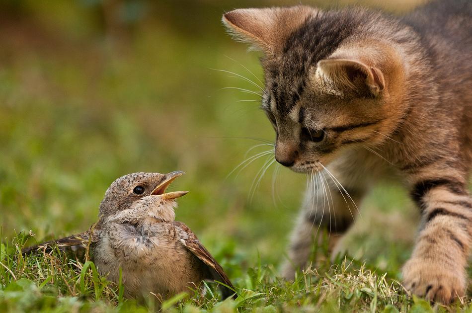 Дружба в животном мире