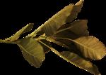 feli_l_foliage3.png