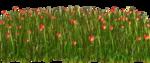 Lug_Grass_Flower (1).png