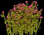 Lug_Grass_Flower (35).png