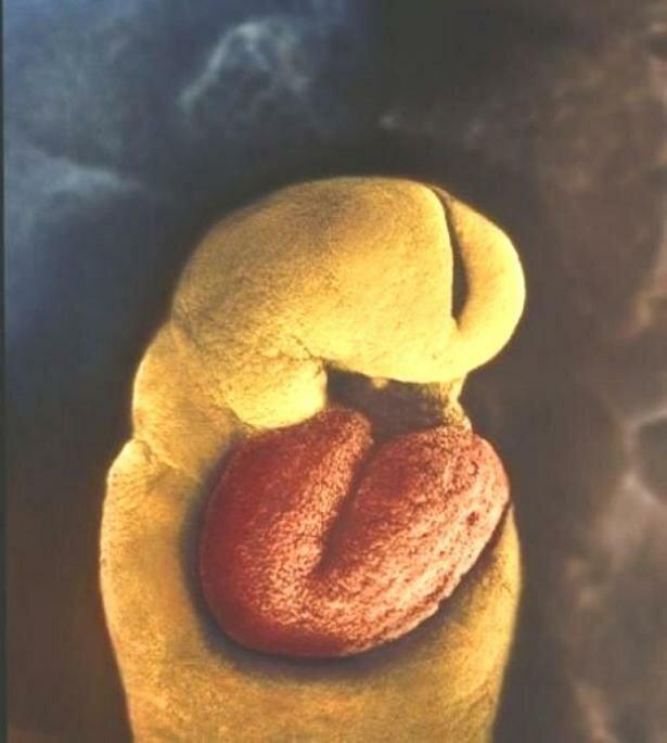Уникальный репортаж из женского тела - история зарождения жизни