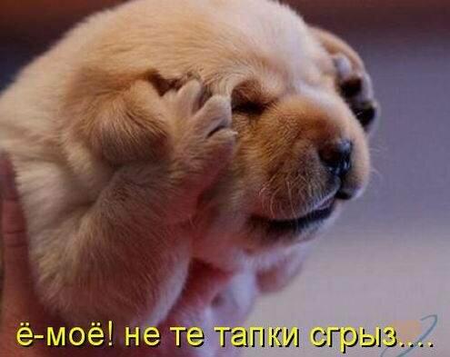 http://img-fotki.yandex.ru/get/6432/194408087.1/0_9085b_225738e0_L.jpg