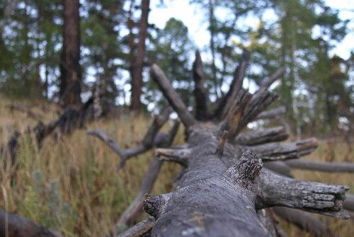 Деревья наСугомаке