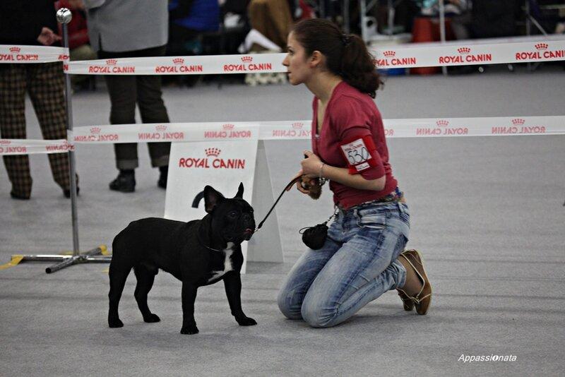 Выставка собак в Сокольниках