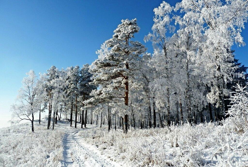 Зимняя дорога.JPG