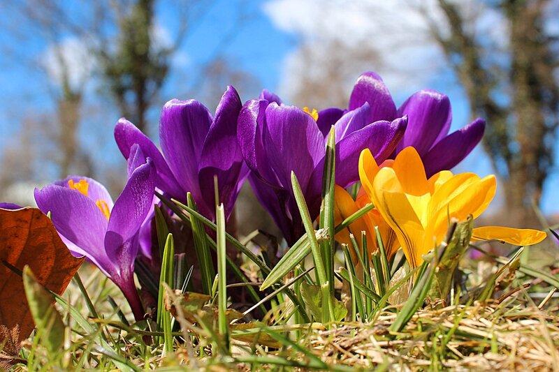 Весны очарование