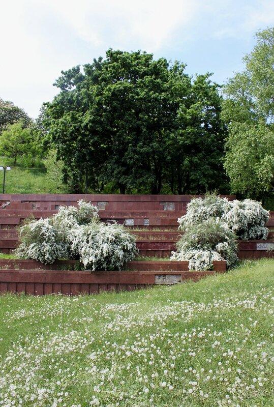 Одуванчики и цветущие кусты