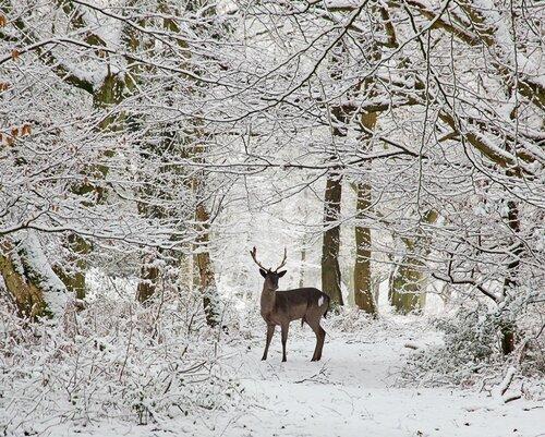 Мой лес, мой мир, мой дом