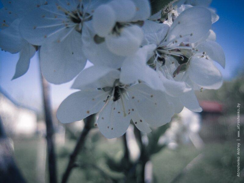 весенние пейзажи на планшет Huawei