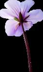 NLD Flower 4 b.png