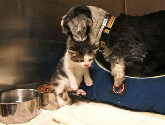 история собаки и котенка