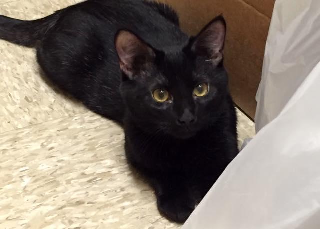 котенок спасает жизнь человека