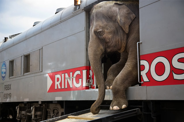 "Stephanie Sinclair, United States. Professional; Daily Life. ""The Ringling Bros and Barnum & Bailey"
