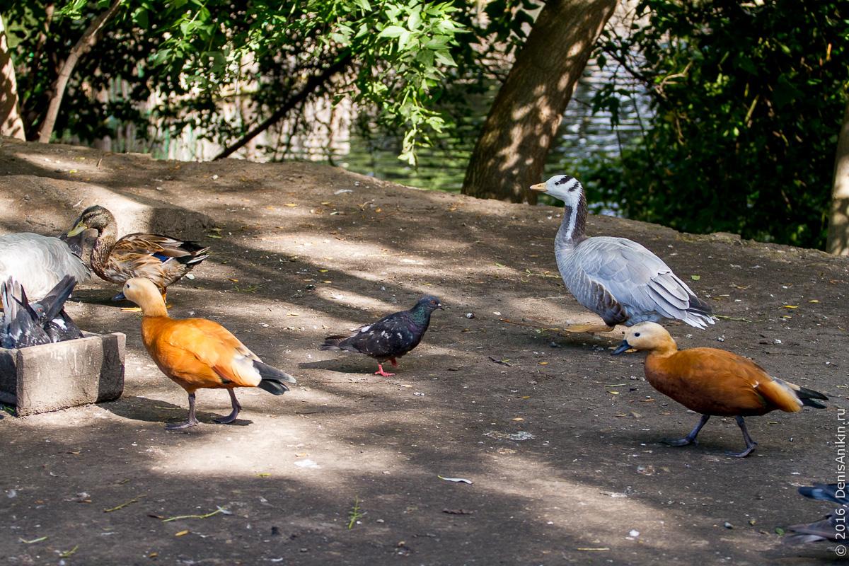 Пензенский зоопарк 20